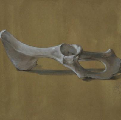 Bone Study – 2010